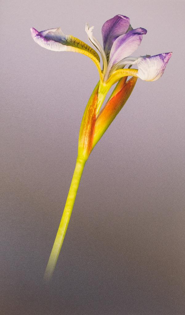 Open-Iris