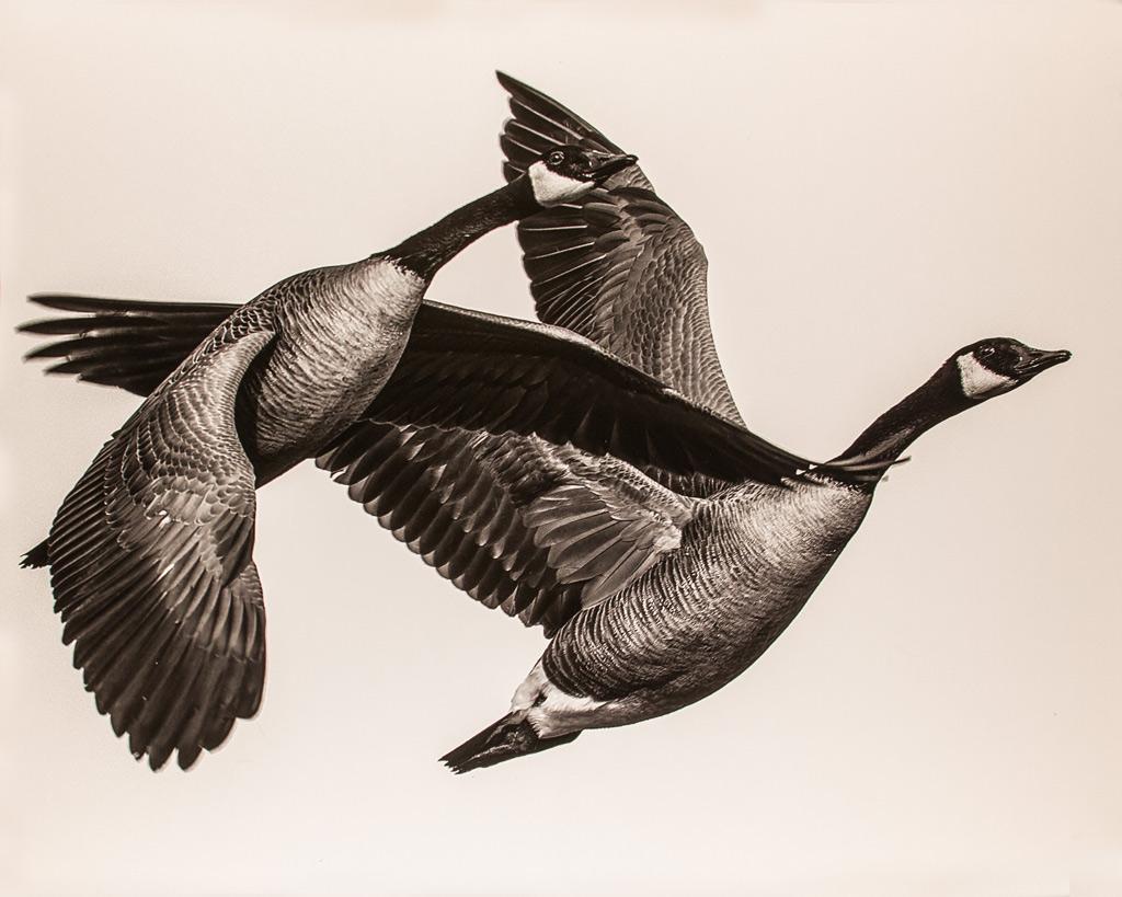 Together-We-Fly