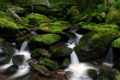 Forest-Stream-4U